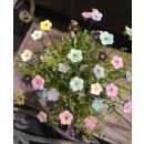 Mini Blütenstick 6 Farben sortiert